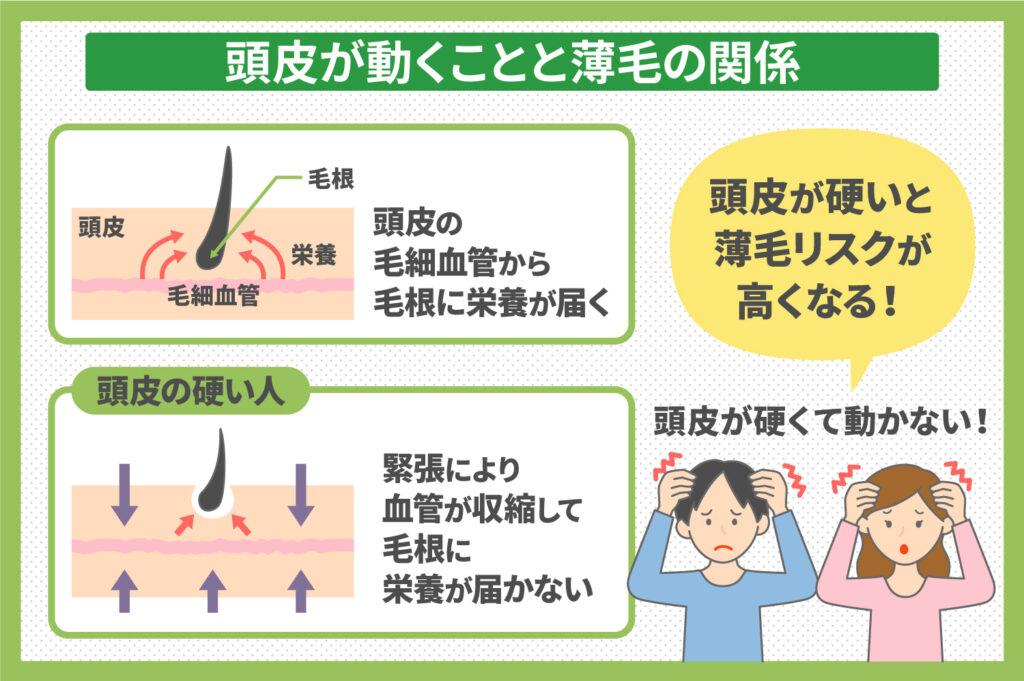 頭皮が動くことと薄毛の関係